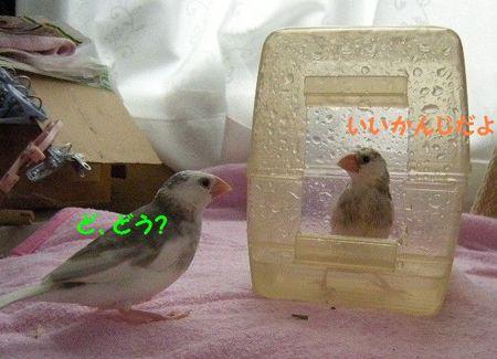 0522-2.JPG