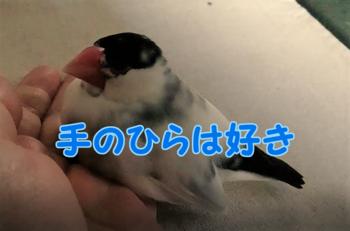 #106手のひらは好き2.png