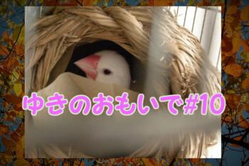 #144ゆき2.png