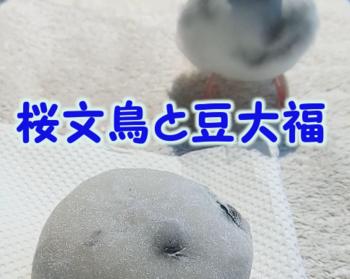 #192豆大福とれい2.png