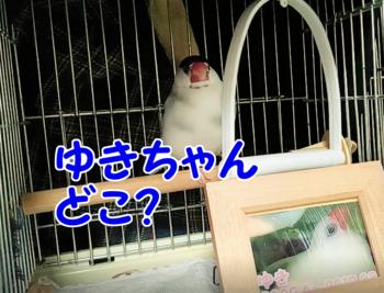 #82ゆきちゃん、どこ?2.png