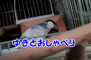 #87ゆきとおしゃべり2.png