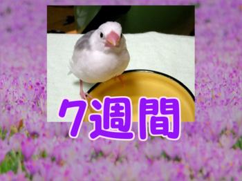 #117_四九日2.png