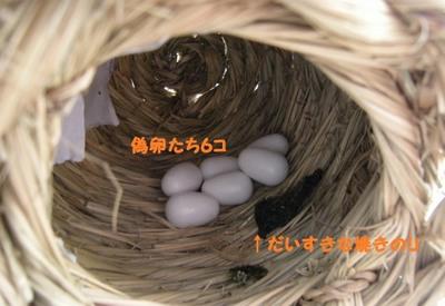 DSCN3454 (640x441).jpg