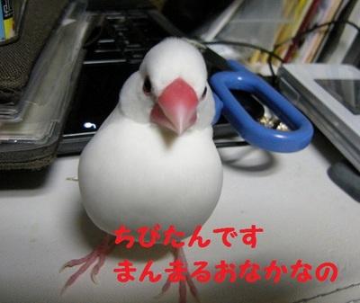DSCN3658 (640x540).jpg