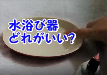 グラタン皿2.png